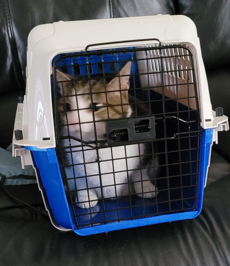 17 pound cat in a Van Ness Calm Carrier.